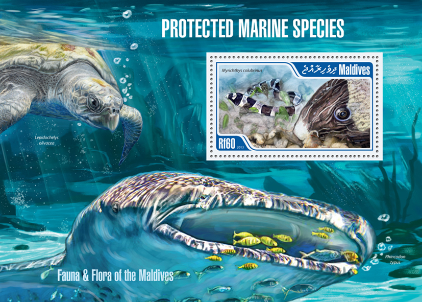 Marine species - Issue of Maldives postage stamps