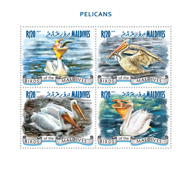 Pelicans - Issue of Maldives postage stamps