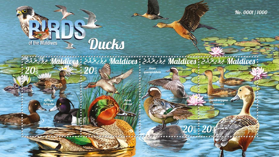 Ducks - Issue of Maldives postage stamps