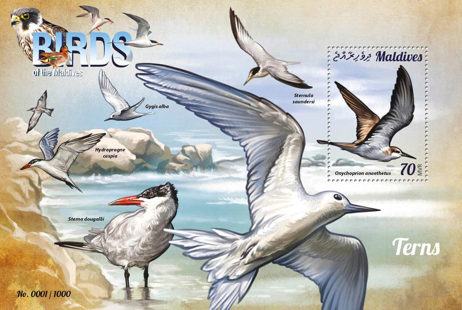Terns - Issue of Maldives postage stamps
