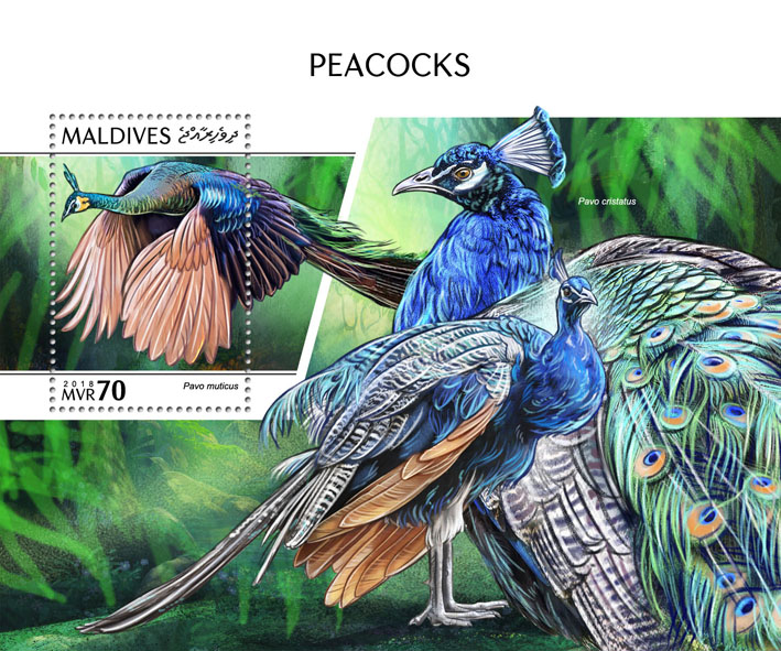 Peacocks - Issue of Maldives postage stamps