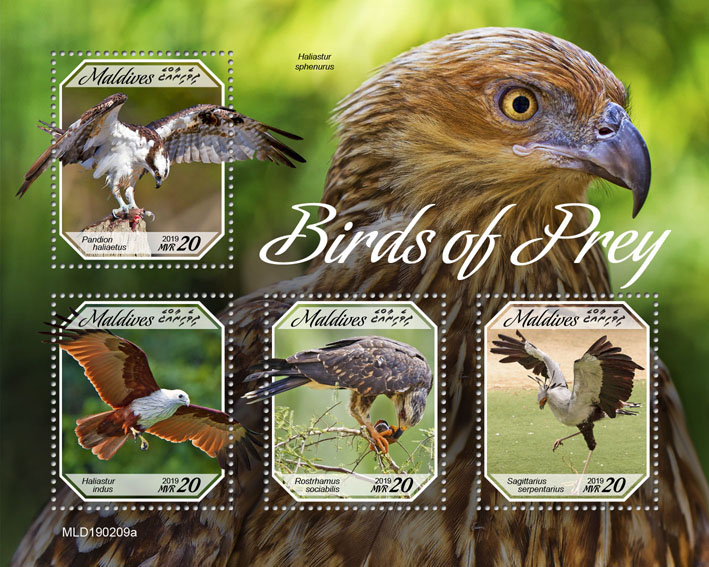 Birds of prey - Issue of Maldives postage stamps